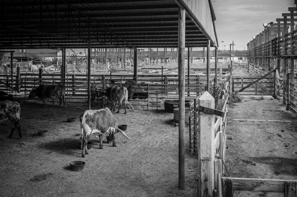 stockyards-2