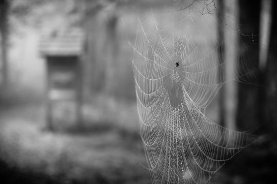 20140915-145412-©DuaneLPandorf-L1031145