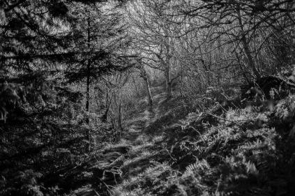 20141023-162056-©DuaneLPandorf-L1032856