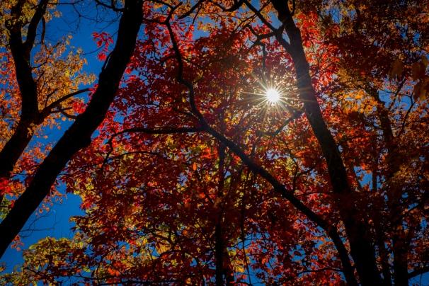 Autumn Sunburst